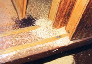 Ataque-de-cupim-de-madeira-seca-em-guarda-roupa-300x208